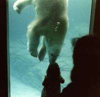 picture of polar bear and little girl kissing through the glass